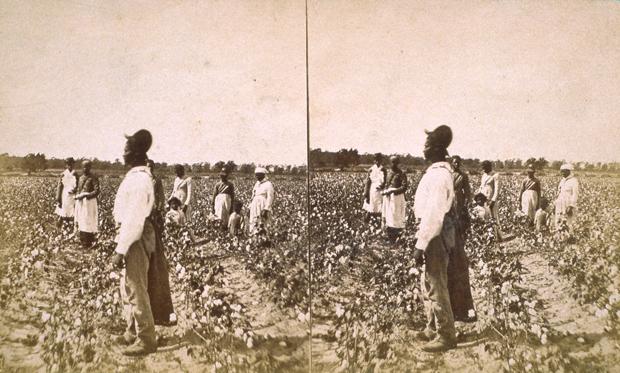 cotton harvest people archives