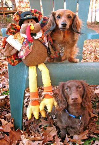 Dogs thanksgiivng